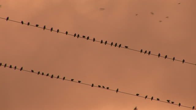 WS, LA, Silhouettes of birds on a wire against orange sky at sunset, Nashville, Tennessee, USA