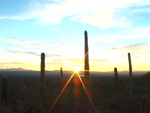 stockvideo's en b-roll-footage met ws, silhouettes of cactuses at sunset, usa - plate met stilstaande achtergrond