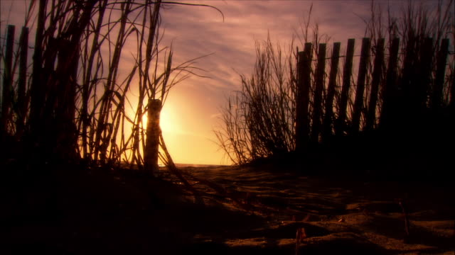 ms, silhouettes of grass and wooden fence on beach at sunrise, myrtle beach, south carolina, usa - オオハマガヤ属点の映像素材/bロール
