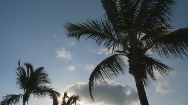 ms, la, silhouettes of palm tree tops against sky at sunset, abaco islands, bahamas - fan palm tree stock videos & royalty-free footage
