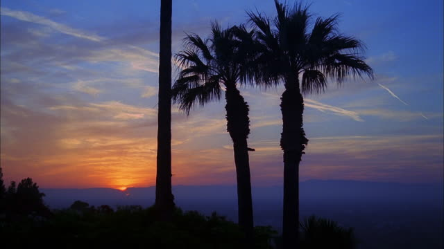 Silhouettes of palm trees against a golden sky at sunset, Studio City, California Available in HD.