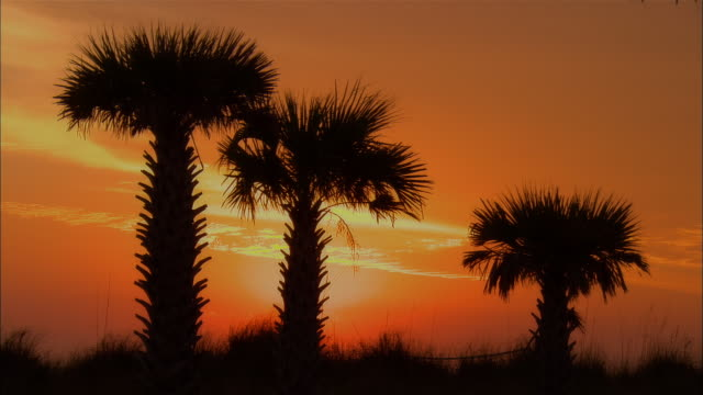 MS, Silhouettes of palm trees against orange sky at sunset, Panama City, Florida, USA