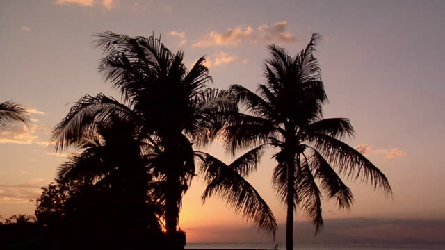 stockvideo's en b-roll-footage met ms, silhouettes of palm trees against sky at sunset, manila bay, philippines - waaierpalm