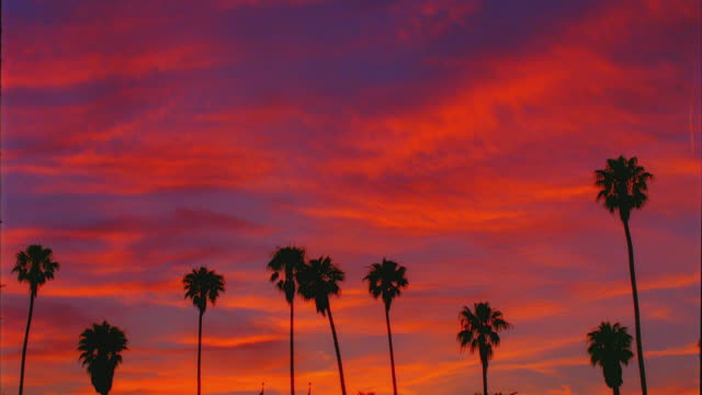 vidéos et rushes de t/l, ws, silhouettes of palm trees and against moody sky at sunrise,  santa barbara, california, usa - palmier