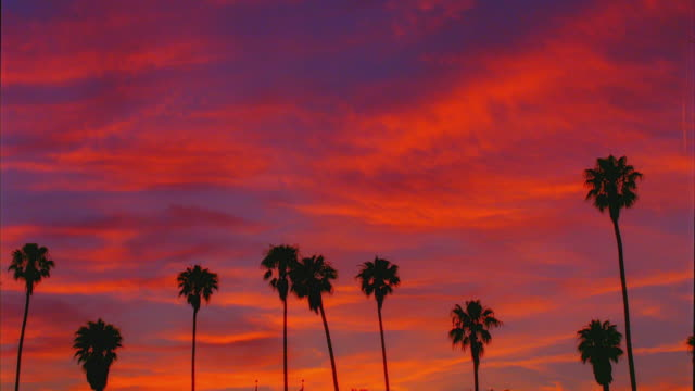 vídeos de stock e filmes b-roll de t/l, ws, silhouettes of palm trees and against moody sky at sunset, day to dusk, santa barbara, california, usa - santa barbara