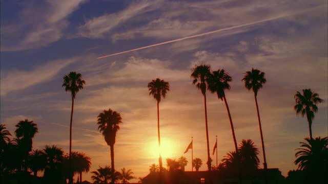 WS, Silhouettes of palm trees and flagpoles against sky at sunset, Santa Barbara, California, USA