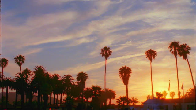 T/L, WS, Silhouettes of palm trees and flagpoles against sky at sunset, Santa Barbara, California, USA