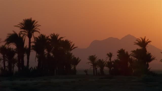 vídeos y material grabado en eventos de stock de ws, pan, silhouettes of palm trees and mountains at sunset - oasis desierto