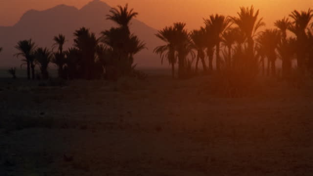 tu, ws, silhouettes of palm trees and mountains at sunset - desert oasis stock videos & royalty-free footage