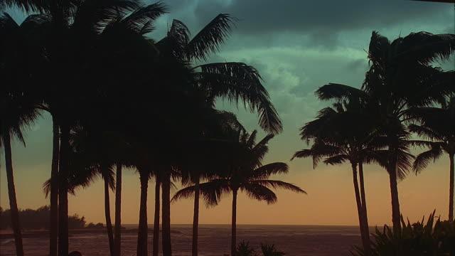 ms, silhouettes of palm trees on beach at sunset, hawaii, usa - solfjäderspalm bildbanksvideor och videomaterial från bakom kulisserna