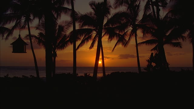 stockvideo's en b-roll-footage met ws, silhouettes of palm trees on beach at sunset, hawaii, usa - waaierpalm