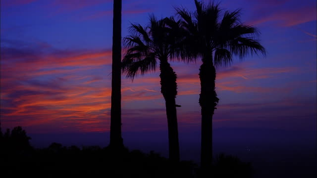 Silhouettes of palms against orange clouds in a deep blue sky as light fades, Studio City, California Available in HD.