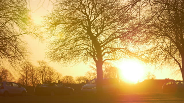 silhouettes of people and vehicles passing trees in winter at sunrise in a city park - winter stock videos & royalty-free footage