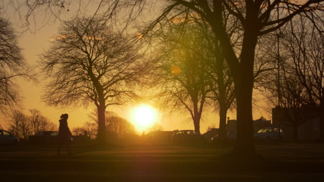 silhouettes of people and vehicles passing trees in winter at sunrise in a city park - back lit stock videos & royalty-free footage