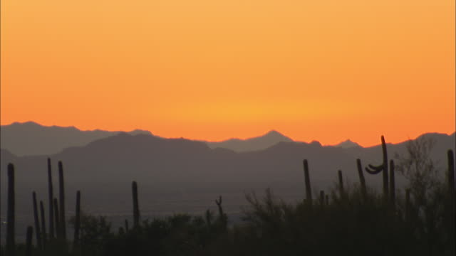 WS Silhouettes of saguaro cactus and mountains against orange sky at sunset, Tucson, Arizona, USA