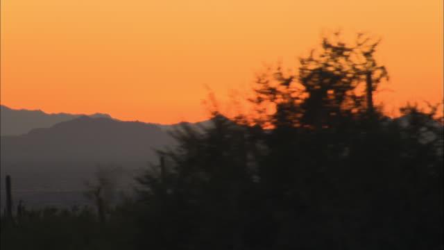 aerial silhouettes of saguaro cactus and mountains against orange sky at sunset, tucson, arizona, usa - saguaro cactus stock videos & royalty-free footage