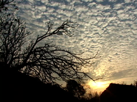 T/L, MS, Silhouettes of tree branches against clouds on sky at sunset, Vang- Vieng, Laos