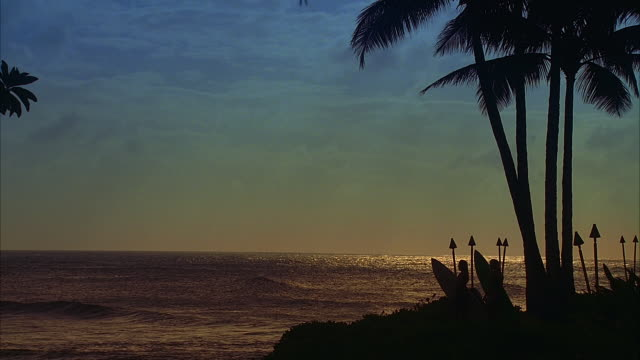 stockvideo's en b-roll-footage met ws, silhouettes of two female surfers facing ocean at sunset, oahu, hawaii, usa - waaierpalm