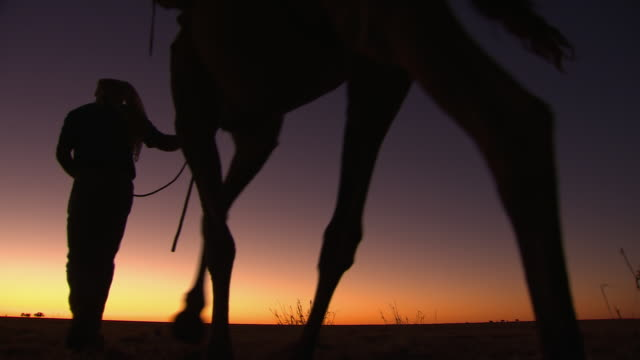 ws la silhouetting camel train walking at dusk / boulia, queensland, australia - hat stock videos and b-roll footage