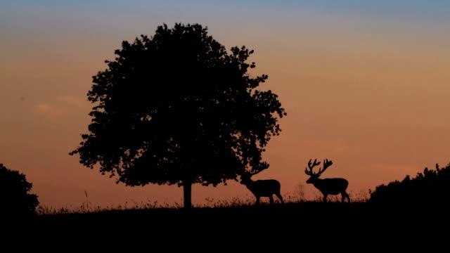vidéos et rushes de silhuette elks - type de chasse