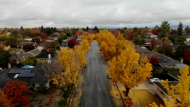 silicon valley california autumn with ginko trees - ginkgo stock videos & royalty-free footage