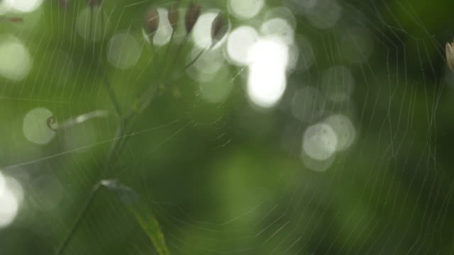 a silk spider clings to its web - invertebrate stock videos & royalty-free footage