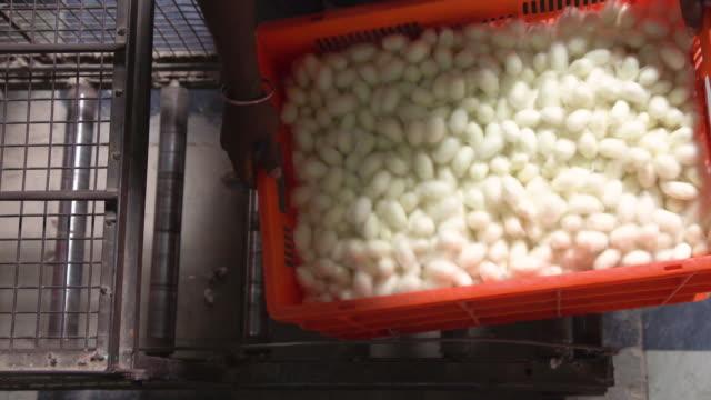 silkworm cocoon boxes directly above view. market at ramanagara, bangalore - indischer subkontinent abstammung stock-videos und b-roll-filmmaterial