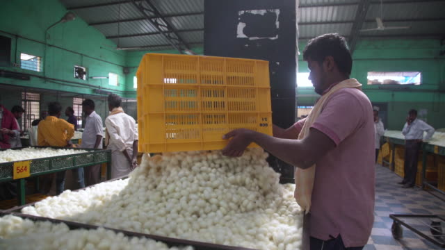 silkworm cocoon market at ramanagara, bangalore, farmers and buyers, south india - indischer subkontinent abstammung stock-videos und b-roll-filmmaterial