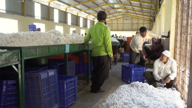 vidéos et rushes de silkworm cocoon market at ramanagara, bangalore - cocon