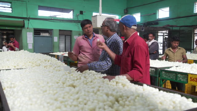 silkworm cocoon quality control at market at ramanagara, bangalore, farmers and buyers, south india - indischer subkontinent abstammung stock-videos und b-roll-filmmaterial