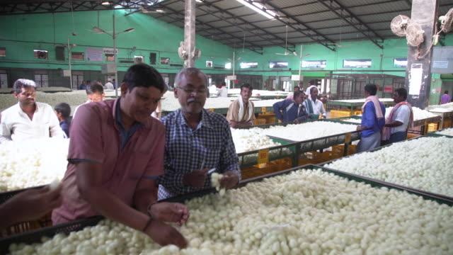silkworm cocoon quality control at market at ramanagara, bangalore - indischer subkontinent abstammung stock-videos und b-roll-filmmaterial
