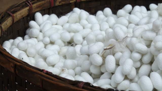 silkworm cocoon - silk stock videos & royalty-free footage