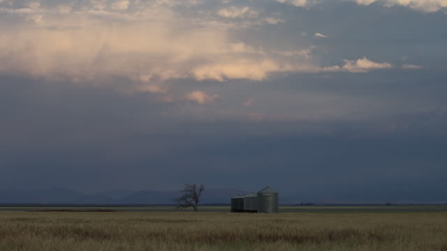 stockvideo's en b-roll-footage met silo and bare tree among fields under overcast sky farmers operate combine harvesters as they harvest oats and barley crops at farms near gunnedah... - bare tree