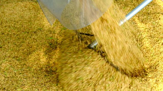 Tours d'ivoire pouring grain harvester dans le camion
