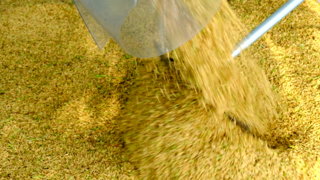 silos harvester pouring grain - rice plant stock videos and b-roll footage