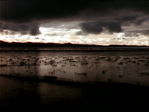 silver clouds hang low over lake titicaca. - wasserpflanze stock-videos und b-roll-filmmaterial