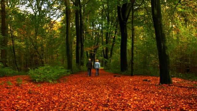 silver couple strolling on forest path in autumn