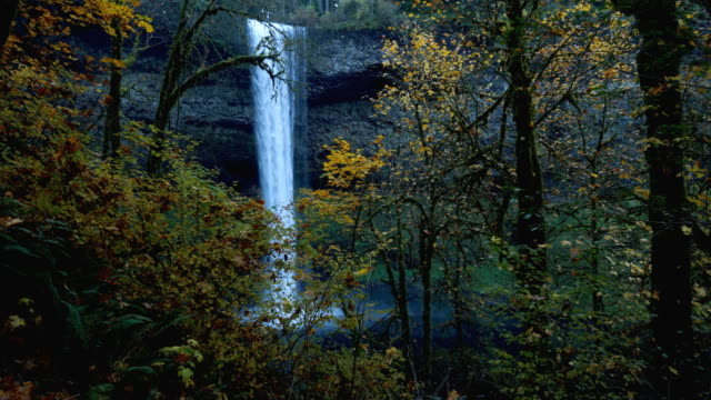 silver falls, oregon - state park stock videos & royalty-free footage