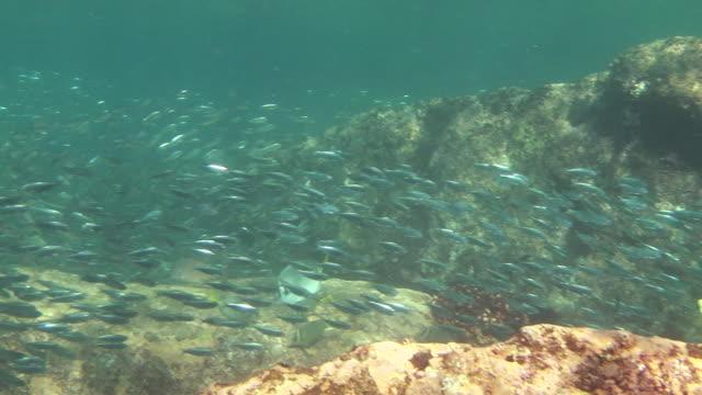 silver fish school above sun-dappled rocks. - dappled light stock videos and b-roll footage