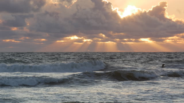 Silver ocean, dramatic clouds on horizon with Orange Sun Beams, seal swimming