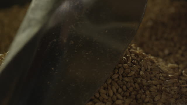 silver scoop in barley seed - orzo video stock e b–roll