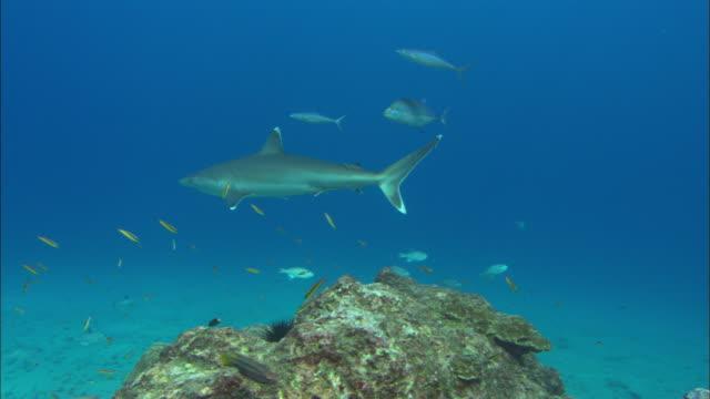 silvertips circle rock, costa rica, pacific ocean  - costa rica stock videos & royalty-free footage