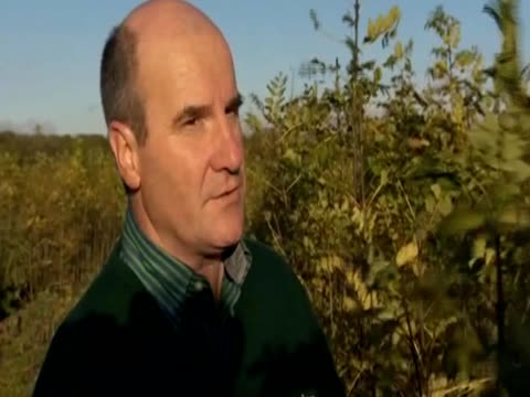 simon ellis of crowders nurseries in lincolnshire discusses being sad about the spread of the ash dieback disease in the uk - vox populi stock videos and b-roll footage