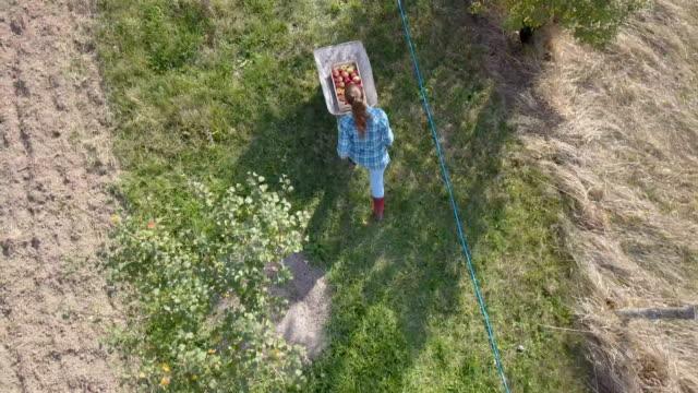 vídeos de stock, filmes e b-roll de vida simples do campo - pegando frutos