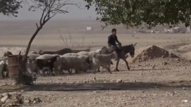 since it was liberated from ypg/pkk terrorists livestock and agriculture are coming alive again in ras alayn northern syria turkey's national defense... - rural scene stock videos & royalty-free footage
