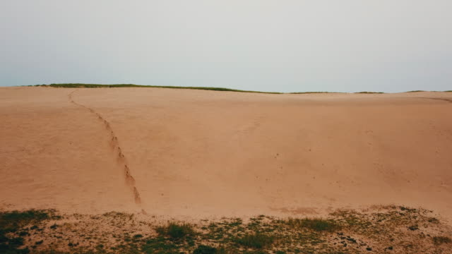 vídeos y material grabado en eventos de stock de sindu-ri coastal sand dune (korea natural monument no. 431) / taean-gun, chungcheongnam-do, south korea - árido