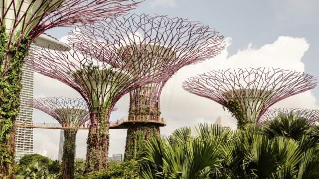 vidéos et rushes de singapore, supertree grove at gardens by the bay - zone boisée