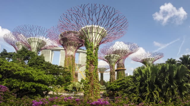 singapore, supertree grove at gardens by the bay - grove stock videos & royalty-free footage