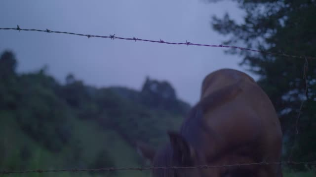 single and thin horse behind a barbed wire fence in the field - 草食性点の映像素材/bロール