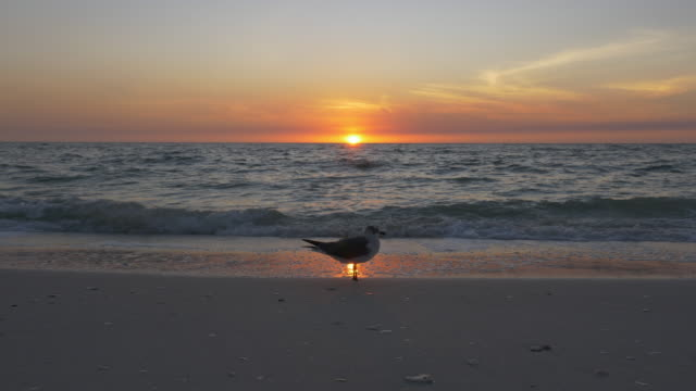 single bird standing at beach during sunset - naples florida stock videos & royalty-free footage